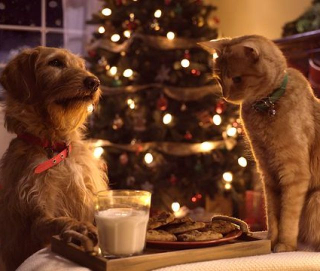 Three Pets White Christmas Famous Song