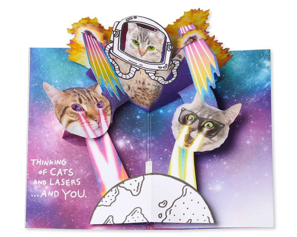 funny cats in space