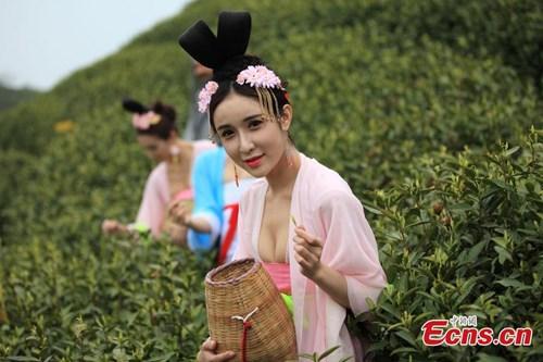 Mỹ nữ Trung Quốc diện y phục cung đình lên núi hái chè
