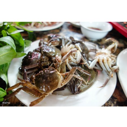 Fresh river crab for hot pot