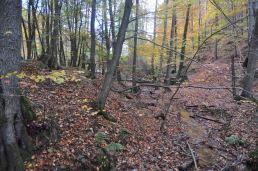 Eiswoog Pfälzerwald - 08