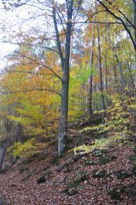 Eiswoog Pfälzerwald - 17