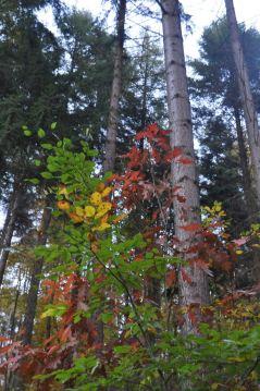 Eiswoog Pfälzerwald - 19