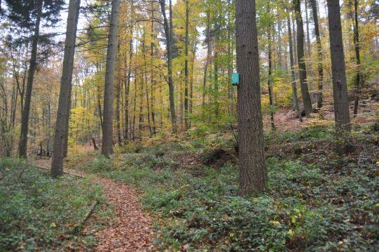 Eiswoog Pfälzerwald - 26