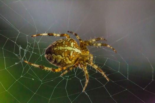Spinne am Küchenfenster