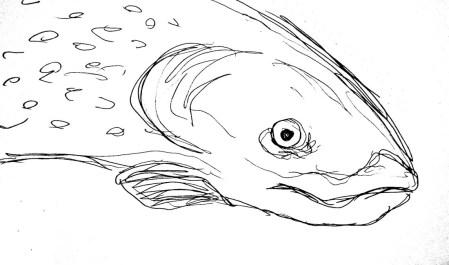 Fische Forelle2