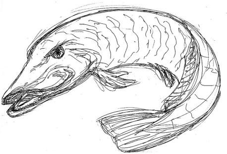 Fische Hecht II
