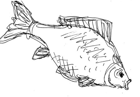 Fische Rotfeder