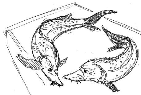 Fische Stoere
