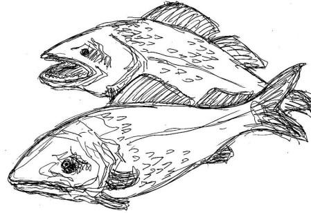 Fische Zander I