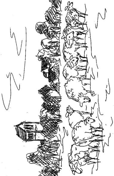 MittelSk17 Ziesar Schafherde