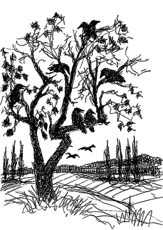 MittelSk3 Zauche Baum mit Raben