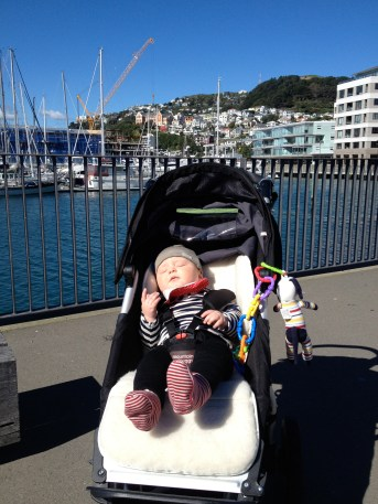 wellington sightseeing