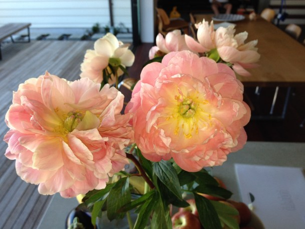 peonies from Prudence