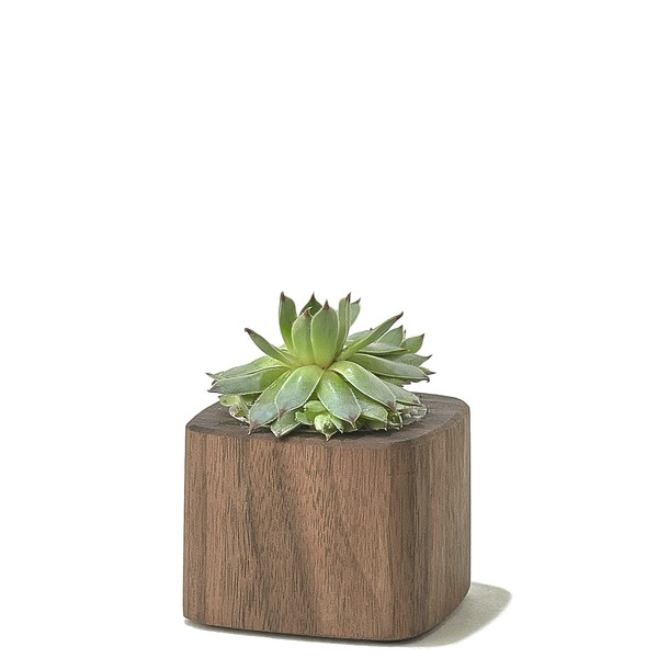 walnut-desk-collection-planter-short-A1_1_600x600_90