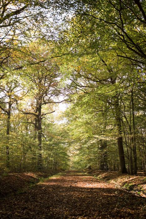 Projet 52 - forêt de Rambouillet