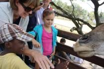 feeding a giraffe with yaya