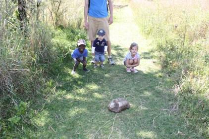 """We found a turtle!"""