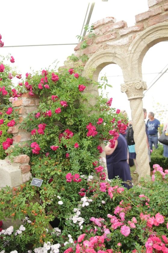 img 1483 Hampton Court Flower Show a world of flowers