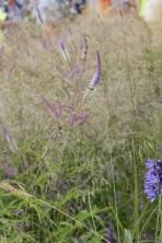 img 1569 Hampton Court Flower Show a world of flowers