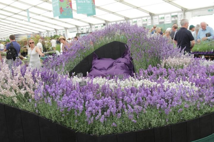 img 16261 15ish eye catching plants at Hampton Court