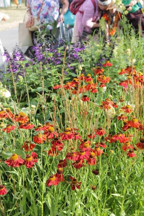 img 1681 Hampton Court Flower Show a world of flowers