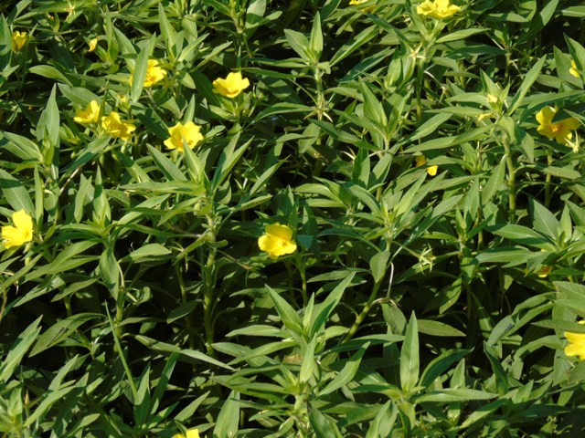 wildflower2small