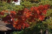 Tonogayato Teien – 殿ヶ谷戸庭園