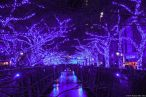 "Megurogawa ""Blaue Grotte / Blue Cave Arch"" (目黒川 青の洞窟)"