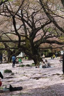 Shinjuku Gyoen, Hanagoza (新宿御苑の花茣蓙)