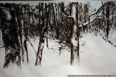 Jens Rausch: Durchforsten - den Wald durchstreifen (OAG-Ausstellung)