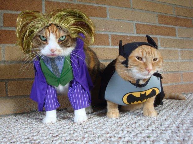 halloween_cats_petco