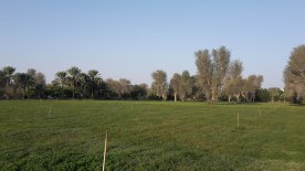Hamraniyah Fields