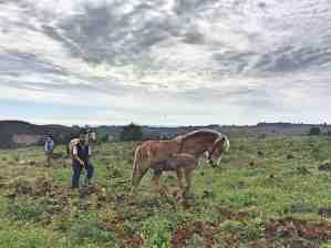 site_ciel_chevaux