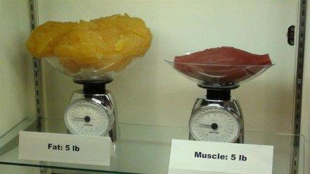 2,3 kg de graisse par rapport à 2,3 kg de muscle