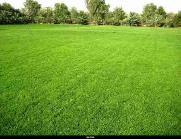 lawn care mckinney tx thompson