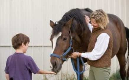 Feeding the retired racehorse