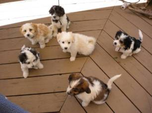 Puppies from our 2010 litter....sitting before they eat!