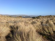 Dunes at Bodega Bay