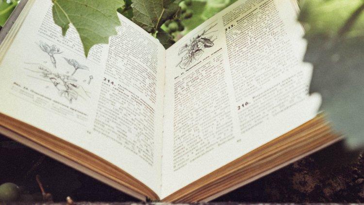 book FILEminimizer 300x169 - Phương pháp viết đề cương, luận văn khoa học