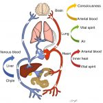 and Respiratory Functions of the Blood