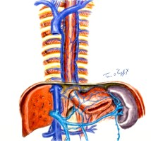 veines-oesophage-varices