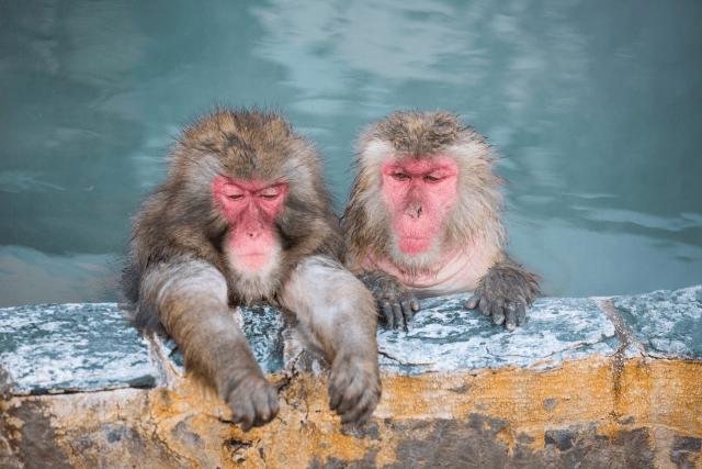 安全・安定・リスクなしのトロン温泉で集客・地域活性