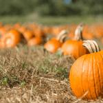 Fun Halloween While Social Distancing