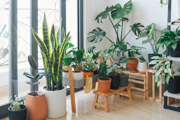 potted-green-indoor-plants
