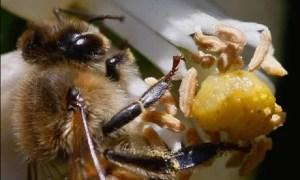 abelhas-01
