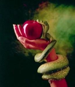 1995 --- Snake and Forbidden Fruit --- Image by © Don Mason/CORBIS