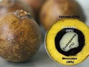 macauba-fruto