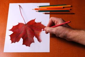 colored pencil beginners techniques drawing leaf pencils colour draw drawings easy tutorials thoughtco shading colorful tutorial flower getty