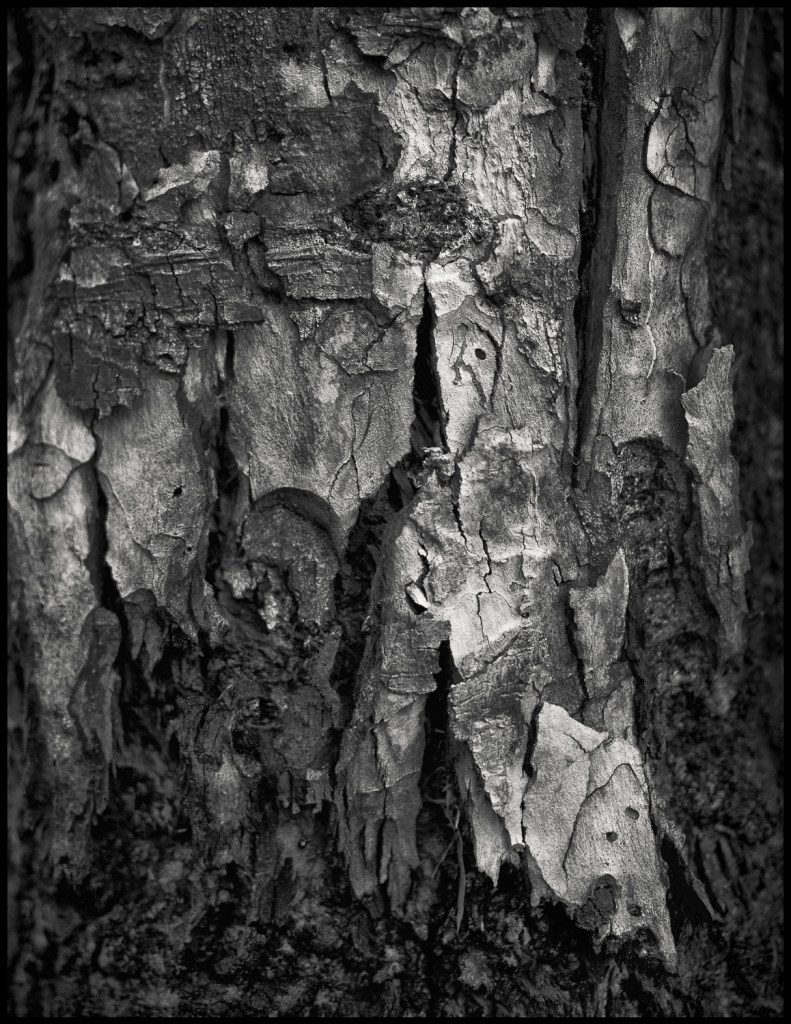 trunk abstract #1